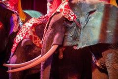 Στενή επάνω λεπτομέρεια ελεφάντων τσίρκων στο Μαύρο Στοκ Εικόνες