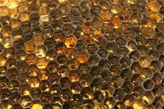 στενή κυψέλη επάνω στη σφήκ&al Στοκ εικόνα με δικαίωμα ελεύθερης χρήσης