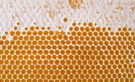 στενή κυψελωτή εικόνα ανασκόπησης επάνω Σύσταση της κηρήθρας κεριών μελισσών από την κυψέλη που γεμίζουν με το χρυσό μέλι στοκ εικόνα με δικαίωμα ελεύθερης χρήσης