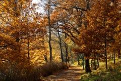 Στενή πορεία μέσα - μεταξύ της βαλανιδιάς και των δέντρων ασβέστη στοκ εικόνες