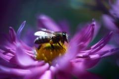 στενή πορφύρα κήπων λουλουδιών πεδίων βάθους Στοκ εικόνα με δικαίωμα ελεύθερης χρήσης