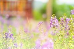 στενή πορφύρα κήπων λουλουδιών πεδίων βάθους Στοκ Εικόνες