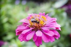 στενή πορφύρα κήπων λουλουδιών πεδίων βάθους Στοκ Φωτογραφία