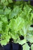 στενή σαλάτα επάνω Στοκ Εικόνες