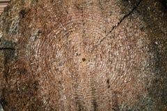 στενή σύσταση επάνω στο δάσος δάσος ανασκόπησης Στοκ φωτογραφία με δικαίωμα ελεύθερης χρήσης