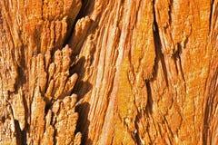 στενή σύσταση επάνω στο δάσος αφηρημένη ανασκόπηση Στοκ φωτογραφίες με δικαίωμα ελεύθερης χρήσης
