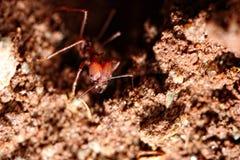 στενή τρύπα μυρμηγκιών επάνω Στοκ Εικόνες