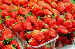 στενή φράουλα επάνω στοκ φωτογραφία