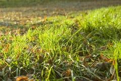 στενή φύση χλόης ανασκόπησης φθινοπώρου επάνω Στοκ Εικόνα