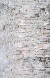 στενή όψη σύστασης σημύδων φλοιών Στοκ εικόνες με δικαίωμα ελεύθερης χρήσης