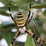 στενή dof μακρο ρηχή αράχνη spiderweb επάνω Στοκ Φωτογραφία