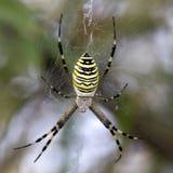 στενή dof μακρο ρηχή αράχνη spiderweb επάνω Στοκ Εικόνες