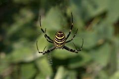 στενή dof μακρο ρηχή αράχνη spiderweb επάνω Στοκ Φωτογραφίες