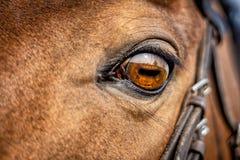 Στενός επάνω ματιών αλόγων στοκ εικόνα με δικαίωμα ελεύθερης χρήσης