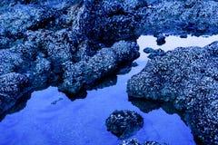 Στενός ένας επάνω της λαβίδας και του κοχυλιού ευθυγράμμισε το βράχο Στοκ Εικόνα