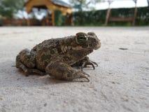 στενός βάτραχος επάνω Στοκ Εικόνες