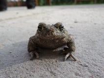 στενός βάτραχος επάνω Στοκ Φωτογραφία