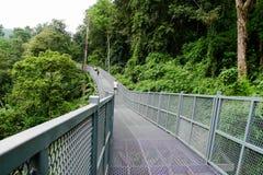 Στενός διάδρομος της διάβασης πεζών θόλων δέντρων, η γέφυρα σιδήρου στο τροπικό δάσος στοκ εικόνες