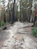 Στενός δρόμος μέσω ενός δάσους Στοκ Εικόνα