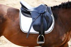 Στενός επάνω αθλητικών αλόγων κάτω από την παλαιά σέλα δέρματος στη εκπαίδευση αλόγου σε περιστροφές compet στοκ φωτογραφίες με δικαίωμα ελεύθερης χρήσης
