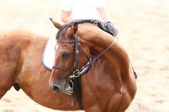 Στενός επάνω αθλητικών αλόγων κάτω από την παλαιά σέλα δέρματος στη εκπαίδευση αλόγου σε περιστροφές compet στοκ εικόνες με δικαίωμα ελεύθερης χρήσης