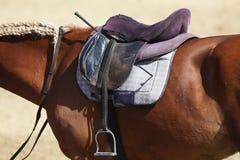 Στενός επάνω αθλητικών αλόγων κάτω από την παλαιά σέλα δέρματος στη εκπαίδευση αλόγου σε περιστροφές compet στοκ εικόνα