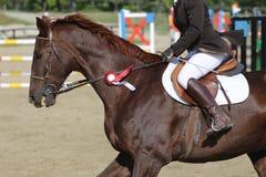 Στενός επάνω αθλητικών αλόγων κάτω από την παλαιά σέλα δέρματος στη εκπαίδευση αλόγου σε περιστροφές compet στοκ εικόνες