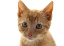 Στενός επάνω γατακιών Στοκ φωτογραφίες με δικαίωμα ελεύθερης χρήσης