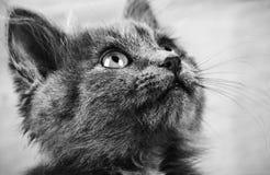 Στενός επάνω γατών πορτρέτου Στοκ Φωτογραφία