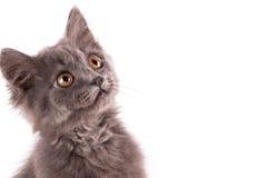 Στενός επάνω γατών πορτρέτου Στοκ εικόνες με δικαίωμα ελεύθερης χρήσης