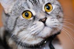 στενός επάνω γατών Στοκ φωτογραφίες με δικαίωμα ελεύθερης χρήσης