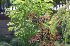 Στενός επάνω δέντρων του FIR brunch r Χνουδωτός στενός επάνω δέντρων έλατου brunch Έννοια ταπετσαριών r στοκ εικόνες με δικαίωμα ελεύθερης χρήσης