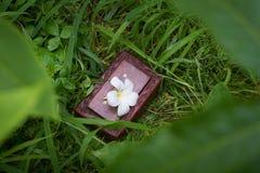 Στενός επάνω κιβωτίων και Plumeria στη χλόη, ειδικά δώρα Στοκ φωτογραφία με δικαίωμα ελεύθερης χρήσης