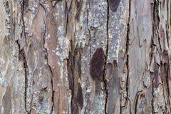 Στενός επάνω κρουστών δέντρων Στοκ φωτογραφία με δικαίωμα ελεύθερης χρήσης