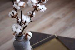 Στενός επάνω λουλουδιών βαμβακιού στο βάζο ένας κλάδος του βαμβακιού σε ένα βάζο Στοκ Εικόνα