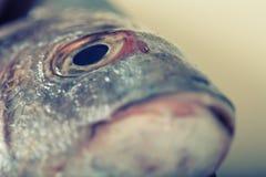 Στενός επάνω ματιών ψαριών Στοκ Εικόνες