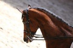 Στενός επάνω πορτρέτου του αθλητικού αλόγου εκπαίδευσης αλόγου σε περιστροφές με τον άγνωστο αναβάτη Στοκ φωτογραφία με δικαίωμα ελεύθερης χρήσης