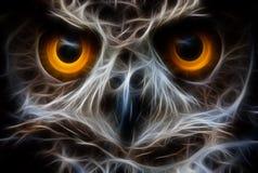 Στενός επάνω προσώπου πουλιών κουκουβαγιών Στοκ Εικόνα