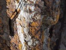 Στενός επάνω σκουριάς ροδών Στοκ Εικόνα