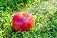 Στενός επάνω της Apple στην πράσινη χλόη Στοκ Φωτογραφία