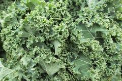 Στενός επάνω του Kale αγοράς πράσινος φυλλώδης στοκ φωτογραφία με δικαίωμα ελεύθερης χρήσης
