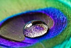 Στενός επάνω φτερών Peacock με το σταγονίδιο Στοκ φωτογραφία με δικαίωμα ελεύθερης χρήσης