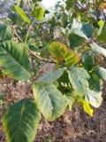 Στενός επάνω φυτού Στοκ Φωτογραφία