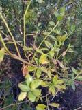 Στενός επάνω φυτού Στοκ φωτογραφίες με δικαίωμα ελεύθερης χρήσης