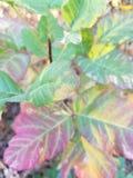 Στενός επάνω φυτού Στοκ εικόνες με δικαίωμα ελεύθερης χρήσης