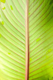 Στενός επάνω φύλλων πράσινων φυτών Στοκ Εικόνα