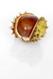 στενός κάστανων που απομ&omic Στοκ φωτογραφία με δικαίωμα ελεύθερης χρήσης