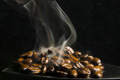 στενός καφές φασολιών που αυξάνεται Στοκ φωτογραφία με δικαίωμα ελεύθερης χρήσης