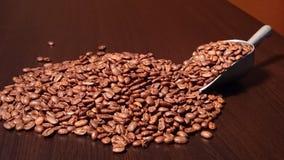 στενός καφές φασολιών που αυξάνεται Στοκ Φωτογραφίες