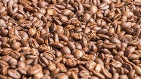 στενός καφές φασολιών που αυξάνεται Στοκ Εικόνα